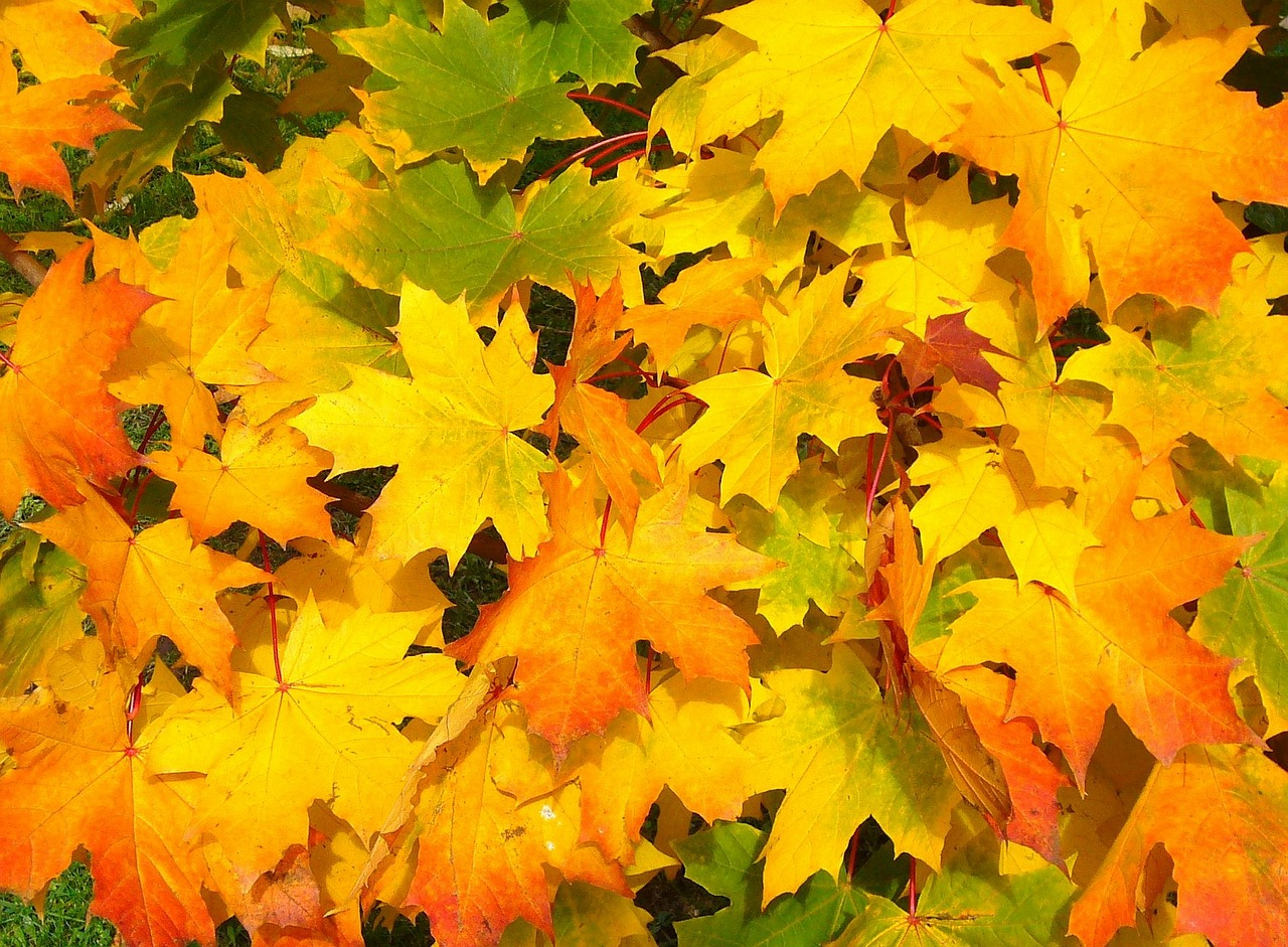 fall leaves representing marketing & practice management tips & ideas for November