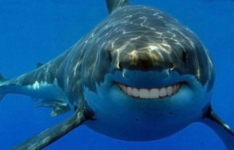 shark smiling with human teeth